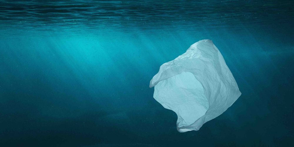 Plastic waste not properly dealt with can end up in aquatic environments.