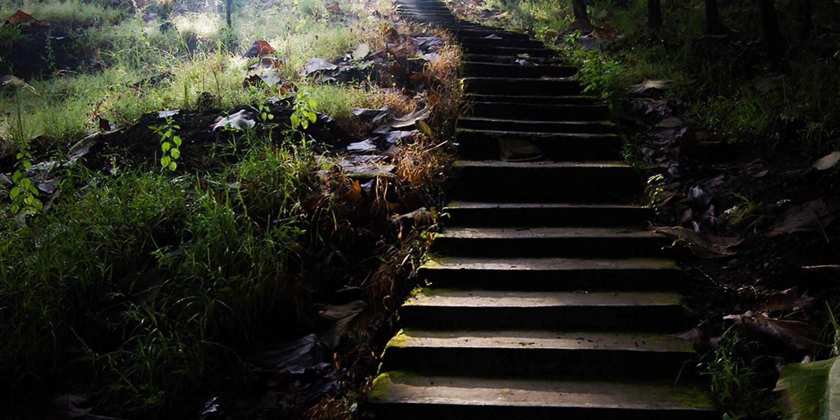 daylight-environment-flora-999311 (2)
